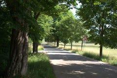 太阳起斑纹,树被排行的乡下公路 免版税图库摄影
