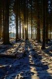太阳通过一个黑暗的冬天森林 免版税库存图片