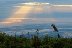太阳通过云彩 图库摄影