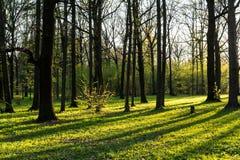 太阳通过叶子放光,并且从木头的长的阴影注册森林 免版税图库摄影
