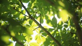 太阳通过叶子3发光 影视素材