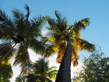 太阳通过在一个海滩的边缘的棕榈树在马提尼克岛海岛上的  免版税库存图片
