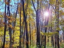 太阳通过在秋天的树 库存照片