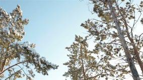 太阳通过树分支发光 股票录像