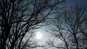 太阳通过树发光在蓝天背景 影视素材