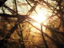太阳通过树发光 光审阅分支没有叶子 免版税图库摄影