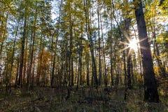 太阳通过树发光 美丽的a的深度 免版税库存照片