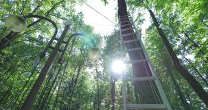 太阳通过树发光 免版税库存图片