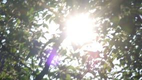 太阳通过树发出光线发光,自然背景 股票录像