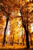 太阳通过树叶子在秋天发光 库存图片
