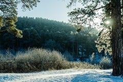 太阳通过树扫视在冬天森林里神的自然 库存照片