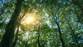 太阳通过树木天棚发光 影视素材