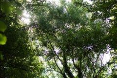 太阳通过树 图库摄影