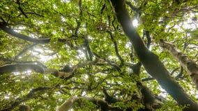 太阳通过树 免版税库存图片
