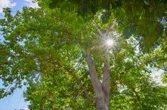 太阳通过树pecleret,夏慕尼,欧特萨瓦省,法国 免版税库存图片