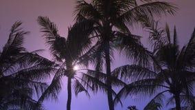 太阳通过棕榈树叶子发光在手段地方的热带海岛 股票视频