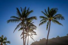 太阳通过棕榈树 库存照片
