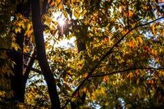 太阳通过秋叶 库存照片
