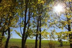 太阳通过秋天森林和领域叶子和树发光 库存图片