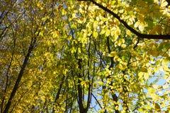 太阳通过秋天森林和领域叶子和树发光 图库摄影