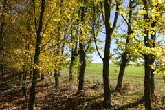 太阳通过秋天森林和领域叶子和树发光 免版税库存照片