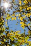 太阳通过秋天森林和领域叶子和树发光 免版税库存图片