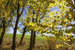 太阳通过秋天森林和领域叶子和树发光 库存照片