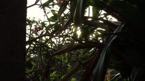 太阳通过结构树 股票视频