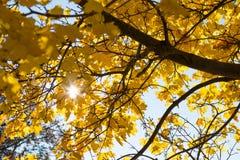 太阳通过落叶的秋天发光 免版税库存图片