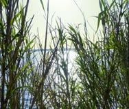 太阳通过象竹子的大绿草发出光线发光与蓝色海表面和天空在背景中 自然背景的概念 库存图片