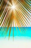 太阳通过绿色和金棕榈叶放光在蓝色海白色沙子塞舌尔群岛背景 库存图片