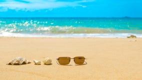 太阳镜和海壳和珊瑚礁在沙滩 蠢材 免版税库存照片