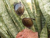 太阳镜有自然本底 免版税库存图片