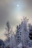 太阳雾斯诺伊常青树抽象Snoqualme通行证华盛顿 库存照片