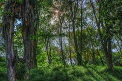 太阳飘动在树之间 免版税库存照片