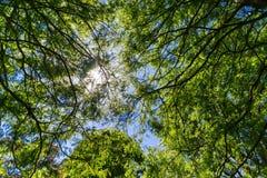 太阳从下面被看见的低谷树和蓝天 免版税库存图片