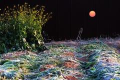 太阳11月 库存照片
