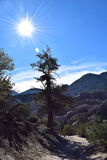 太阳+树 库存图片