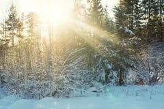 太阳` s在冬天森林里发出光线 免版税库存照片