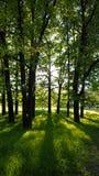 太阳` s通过树的叶子发出光线,明亮早晨 免版税库存图片