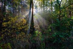 太阳reys通过秋天上色了树叶子 免版税库存图片