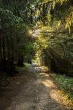 太阳throu树 库存照片