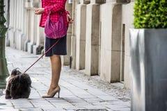 夫人和狗购物 免版税库存照片