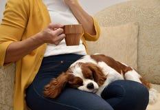 夫人和狗 免版税图库摄影