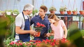 夫妇买的一品红植物在托儿所 库存照片