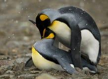 夫妇亲密时候企鹅共享 免版税库存照片