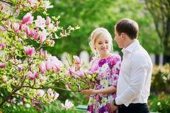 夫妇在开花的木兰树下在一个春日 免版税库存照片