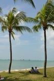 夫妇在2棵棕榈树以下 免版税库存图片