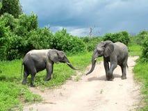 夫妇大象年轻人 免版税库存照片