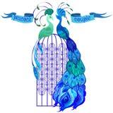 夫妇孔雀 与文本的丝带 蓝色设计 免版税库存照片